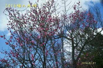 DSC01964空を背景.JPG