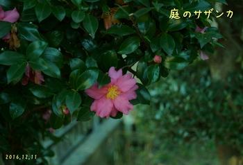 DSC04144トリ・tx.jpg