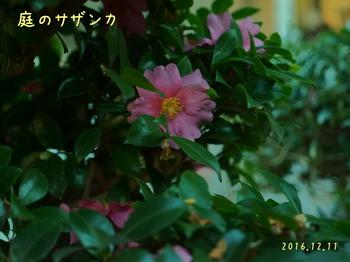 DSC04146トリ・tx.jpg