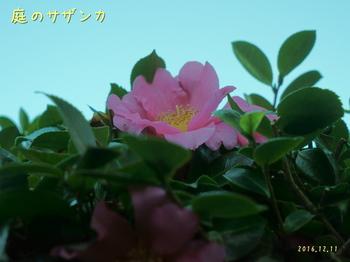 DSC04150ト・トリ・tx.jpg