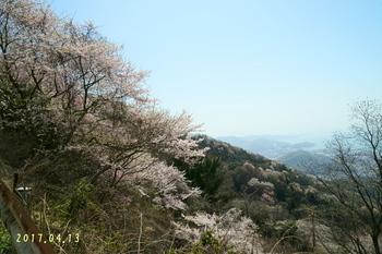 DSC04739桜2.JPG