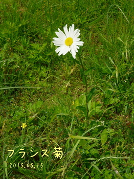 DSC06248トーン・シャープ.JPG