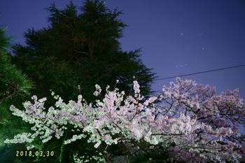 DSC08988家の前の桜2.JPG