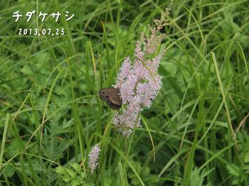 P7253212チダケサシ2縮.jpg