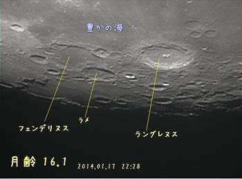 v39_140117_2228ラングレヌス・フェンデリヌス.jpg